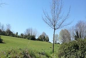 Presidi e sensibilizzazione ambientale presso le aree esterne di circa 40 parchi cittadini