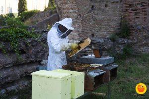 GRABees – il Grande Raccordo Anulare delle api